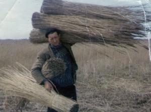 Reed cutting 1950s