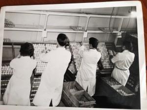Broadland Chicken Hatchery